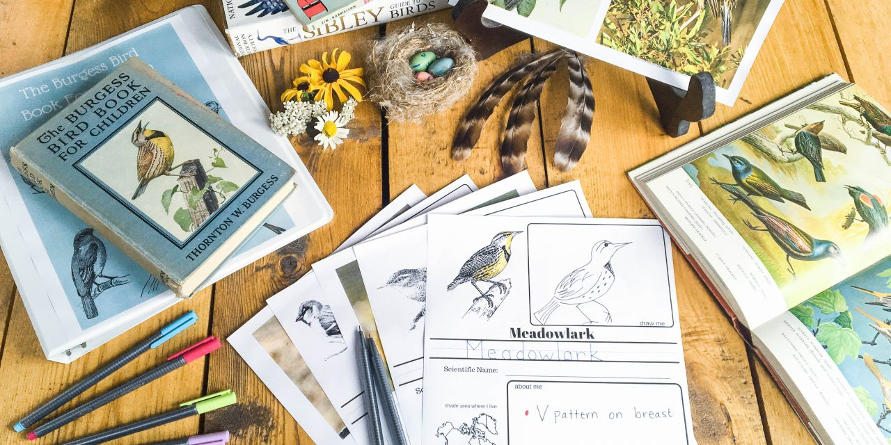 The Burgess Bird Book: The Essential Resource Guide (Chapter by Chapter)